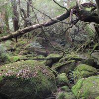 雄大な屋久杉と魅惑の苔の世界