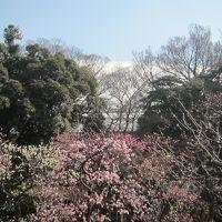 小石川後楽園 梅香る庭園へ