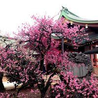 京都 上七軒を通って北野天満宮へ