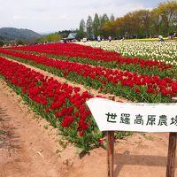広島一人旅 その2 郡山城、世羅高原農場、千光寺、倉敷美観地区ライトアップ