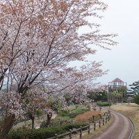 2月の宮崎、山桜と柑橘の旅 その弐