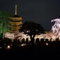 京都の桜 2016