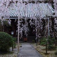 奈良 桜めぐり〜専称寺、九品寺、當麻寺