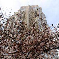 新宿ワシントンホテル周辺の桜