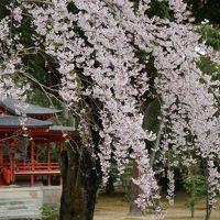 2016.4 京都春の旅〜嵐山・嵯峨野(大覚寺〜鹿王院)�