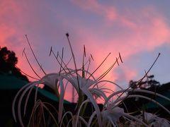 ボルネオ東から西へ 4 グヌン・ムル国立公園
