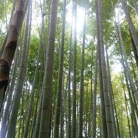 イングリッシュガーデンで美味しいランチ&美しい竹林&サンセットの江ノ電・・・大混雑の鎌倉