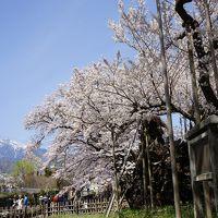 2016.4 満開の桜を訪ねて(1)〜山高神代桜