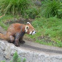 【野毛山動物園】料金無料・混雑必死。レッサーパンダと幼稚園の先生を見に行くちふ散歩。