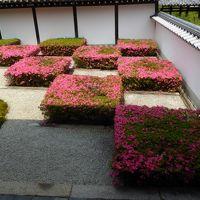 サツキと花菖蒲を見に・・・・京都市バスを乗り継ぐ旅♪