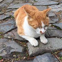 ネコに寄付するために訪れる天満宮 天神桃太郎か! 高槻・上宮天満宮