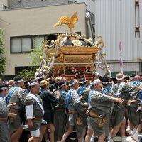 2016年 鳥越神社例大祭