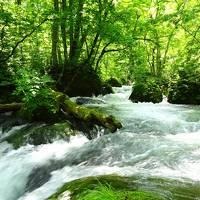 やわらかな新緑に癒される〜っ ◇ 清々しい〜!初夏の奥入瀬渓流ウォーキング♪