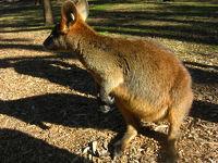 オーストラリア最大級の動物園、タロンガウエストプレインズ動物園(ダボ・オーストラリア)