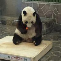 オトナでも楽しめる王子動物園はパンダもコアラもいるよ♪