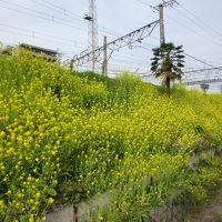 羽根木公園・高尾・八王子花巡り 2011/03/03-04/17