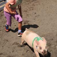 富津2/3  マザー牧場 子豚のレース;人気あり ☆アグロドームで動物ショー