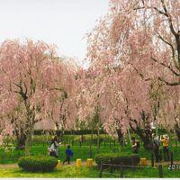 東北3県 ゴールデンウィーク桜探しの旅