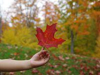 地球タビカゾク 親子4人でカナダ・メープル街道へ。紅葉の絶景! ケベック州編