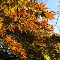箱根の紅葉はまだまだ先(10月26日)