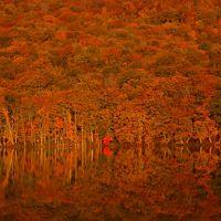 秋色に染まる奥入瀬・十和田・八甲田・白神山地で紅葉と戯れる。
