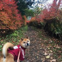 ワンコと旅行♪紅葉を求めて〜軽井沢から海野宿、懐古園での散策〜