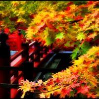 【秋の大収穫祭】 眩しい紅葉と美味しい新米を求めて新潟へ