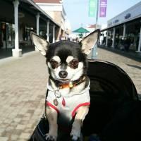 16年11月愛犬と行く那須塩原温泉@栃木