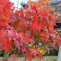 京都2泊3日〜紅葉と街歩きと甘いもの〜