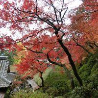 秋の九州・山口の旅(1)大興善寺の紅葉