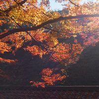 紅葉の香嵐渓 ギリギリで色とりどりの秋を満喫!