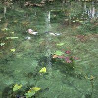 """夫と娘と巡る養老の滝 そして 今話題の名もなき池""""モネの池"""""""