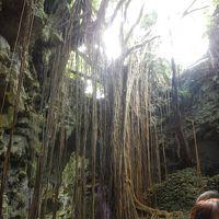 秋の沖縄・・世界遺産「城」+アルファの旅♪3日目・・ガンガラーの谷に癒される。