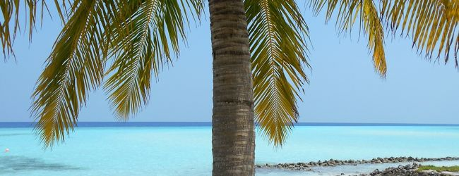 モルディブの風にそよぐヤシの木と、海の...