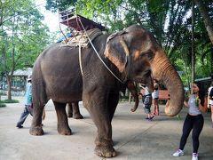 2回目のバンコク 世界自然遺産カオヤイ国立公園  象乗りトレッキング 大自然漫喫の貴重な体験♪ NO3