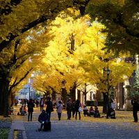 足ならし 黄葉の東京大学を行く 上