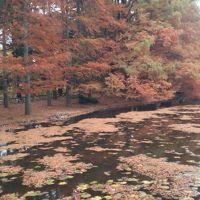 2016年11月末、深大寺からの〜神代植物公園。ひ、ひろい。そして紅葉がキレイでした。