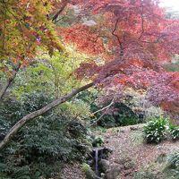 三溪園で紅葉を観る