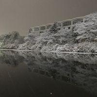 雪の秋田へ出張。