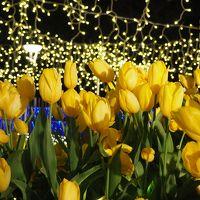 江ノ電に乗って江ノ島へ♪ 早春の花々や海風を感じてうっとり!湘南の宝石イルミネーションも♪