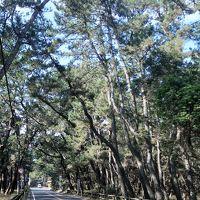 唐津-1 虹の松原 クロマツ100万本近くも ☆高島・玄海国定公園の眺め