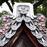 """福岡の春""""太宰府天満宮""""の「飛梅」満開と「御神牛」11頭み〜っけ"""