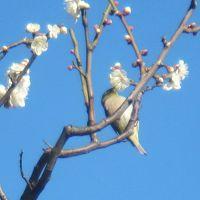 湯島天神 梅まつりで、春の訪れを感じてきました!