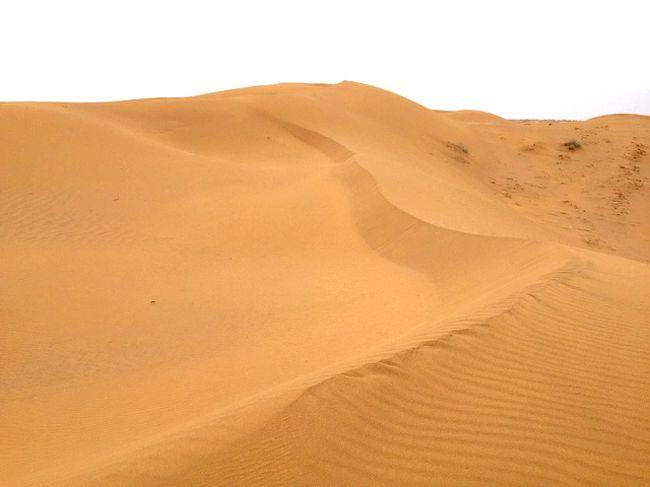 ルート砂漠の画像 p1_10