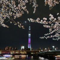 夜桜とスカイツリーと水族館☆東京都:墨田区