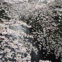 目黒川、千鳥ヶ淵、砧公園、夜桜ならぬ朝桜を見に行く。2017編