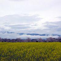 奈良世界遺産フリーきっぷ(奈良・斑鳩・吉野コース)と奈良公園・西の京 その2-明日香村と藤原京跡