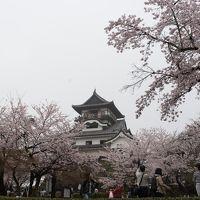 2017 東海の桜【2】犬山城