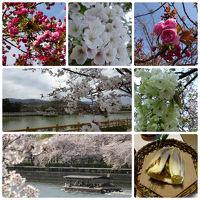 ちょこっと関西・春だ桜だ竹の子だ!(西玉水&錦水亭&姫路城&天ぷらまきの&造幣局の通り抜け&NAOTO)