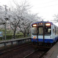 松井ジーター記念展示と、桜の時期の能登半島巡り